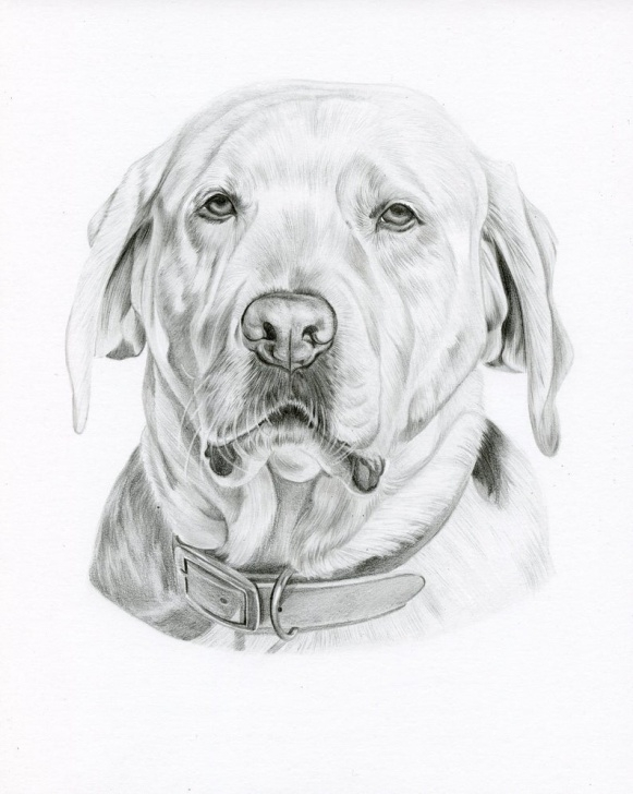 Learning Dog Pencil Art Step by Step Custom Realistic Graphite Black And White Pencil Drawing, Custom Pet  Portrait, Custom Pet Drawing, Pet Art, Dog Art, Dog Pencil Drawing, Photos
