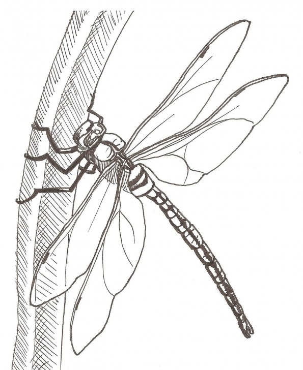 Learning Dragonfly Pencil Drawing Courses How To Draw A Dragonfly Worksheet | Stickers In 2019 | Dragonfly Pictures