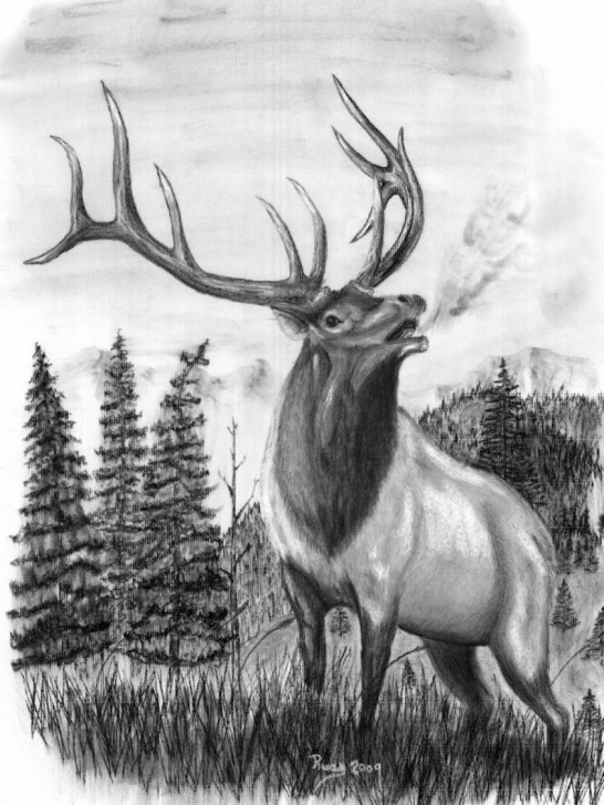 Elk Pencil Drawings