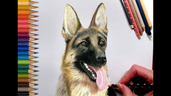 German Shepherd Drawings In Pencil