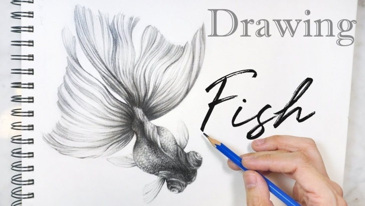 Learning Goldfish Pencil Drawing Easy Drawing Fish ? Pencil Drawing Goldfish Sketch 鉛筆畫 金魚 素描 Pics