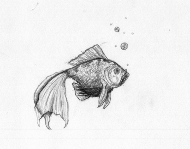 Learning Goldfish Pencil Drawing Easy Goldfish Sketch At Paintingvalley | Explore Collection Of Pictures