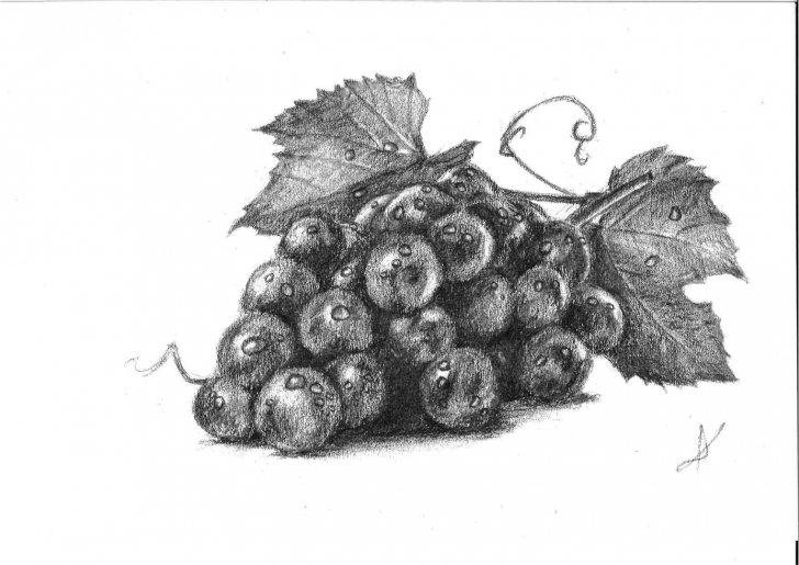 Learning Grapes Pencil Drawing for Beginners Grapes, Charcoal Pencil : Drawing Photos