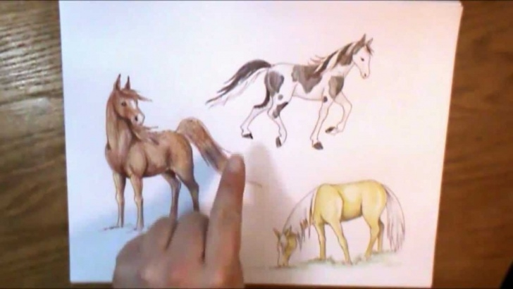 Learning Horse Drawing Colour Simple How To Color A Horse Pics