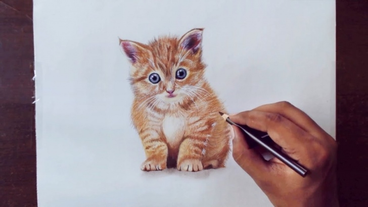 Learning Kitten Pencil Drawing Tutorials Drawing Animals 1 - Drawing A Kitty - Prismacolor Pencils Pics