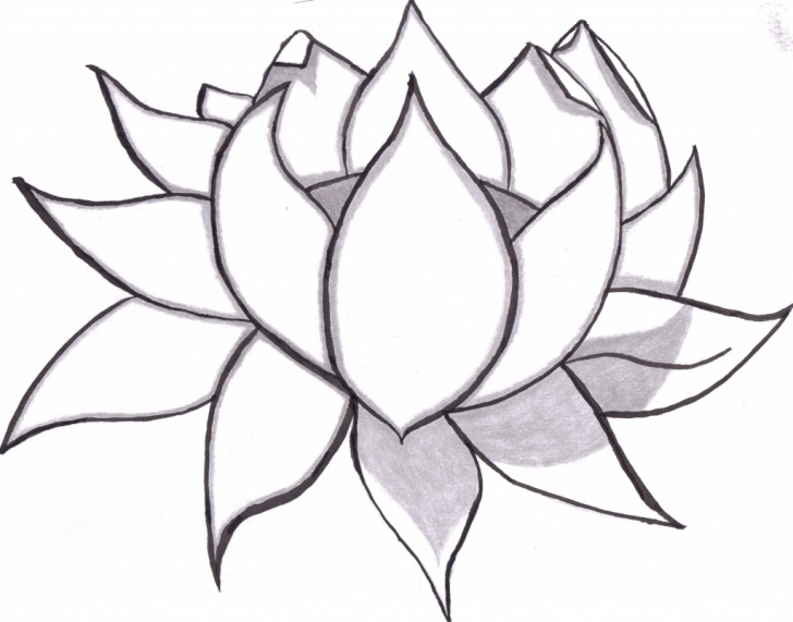 Learning Lotus Pencil Drawing Simple Lotus Flower Pencil Sketch At Paintingvalley | Explore Photos