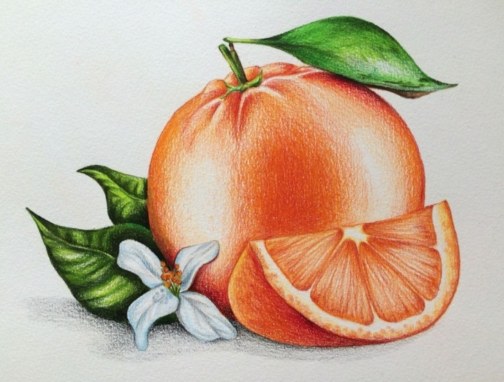 Learning Orange Pencil Drawing Ideas Introduction To Pencil Drawing Supplies & Techniques | Colored Image