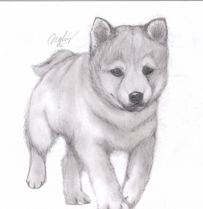Learning Pencil Drawings Of Puppies Lessons Cute Puppy Sketch At Paintingvalley | Explore Collection Of Cute Pic