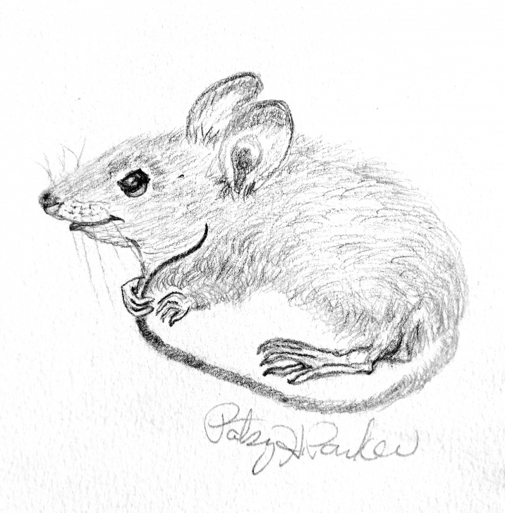 Learning Rat Pencil Drawing Tutorials Mouse Pencil Drawing At Paintingvalley | Explore Collection Of Pics