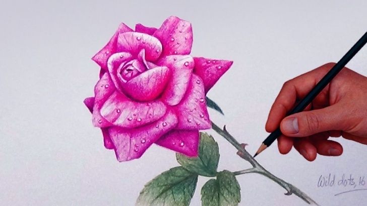 Learning Rose Color Pencil Drawing Simple How To Draw A Rose With Simple Colored Pencils | Photo