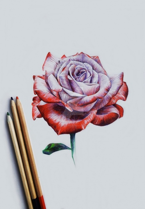 Learning Rose Drawing Colour Step by Step Rose Coloured Pencil Drawing By Ilikeyourdad On Deviantart Photo