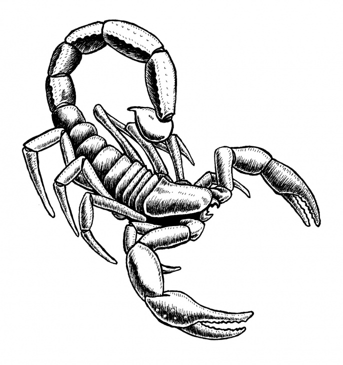 Learning Scorpion Pencil Drawing Lessons Scorpion Pencil Drawing At Paintingvalley | Explore Collection Pic