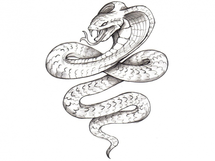 Learning Snake Drawings In Pencil for Beginners Snake Drawings In Pencil At Paintingvalley | Explore Collection Pic