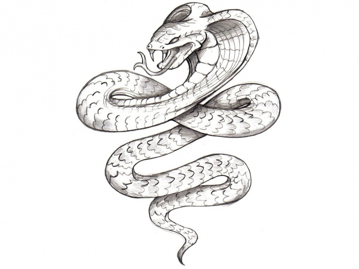 Learning Snake Pencil Sketch Techniques for Beginners Snake Pencil Sketch At Paintingvalley | Explore Collection Of Images