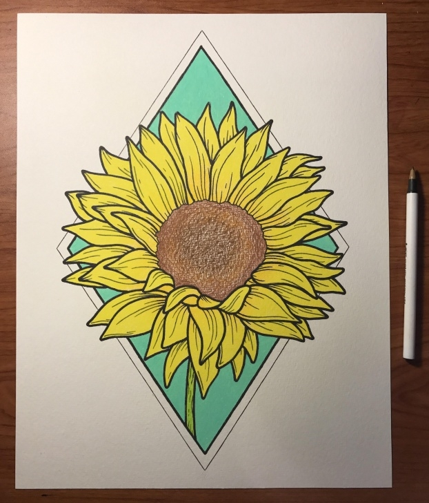 Learning Sunflower Colored Pencil Lessons Sunflower. Colored Pencil. 11X14 : Art Pic