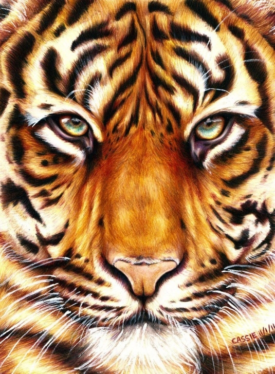 Learning Tiger Colored Pencil Drawing Simple Eye Of The Tiger By Yikes190 | Pencil Drawings In 2019 | Tiger Pic