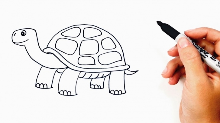 Learning Tortoise Pencil Sketch Techniques for Beginners How To Draw A Tortoise Or Turtle Step By Step Pics