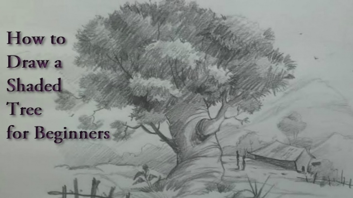 Learning Tree Pencil Shading Techniques Shaded Tree Drawing At Paintingvalley | Explore Collection Of Image