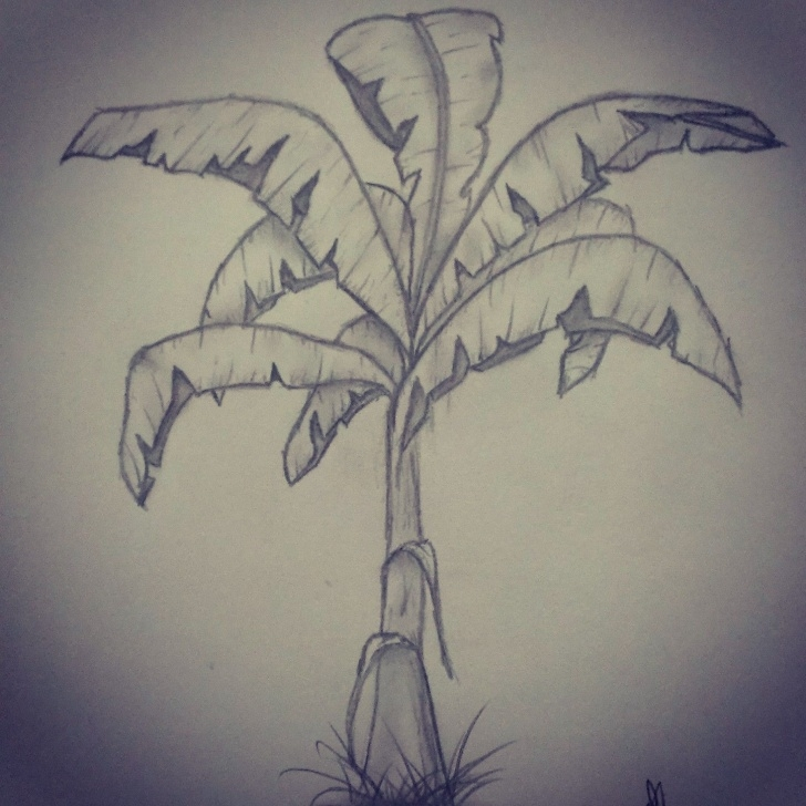 Marvelous Banana Tree Pencil Drawing Ideas Plant, Banana Tree, Pencil Drawing | Ideas For Drawing | Drawings Pics