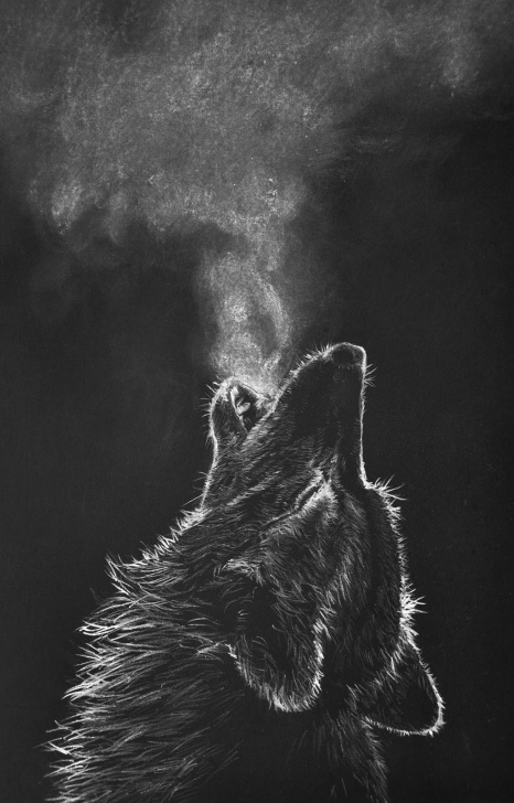 Marvelous Black And White Charcoal Drawings for Beginners White Charcoal Drawing Black Paper Wolf - Google Search | Wolves Pictures