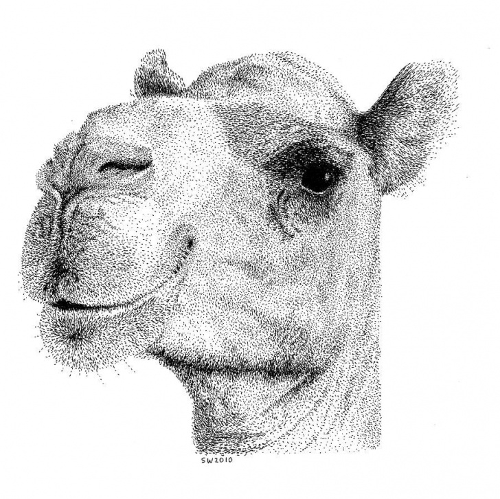 Marvelous Camel Pencil Drawing Tutorials Camel In 2019 | Camels | Dotted Drawings, Stippling Art, Drawings Photos