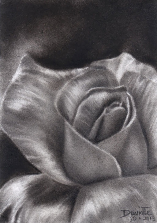 Charcoal Flower Drawings