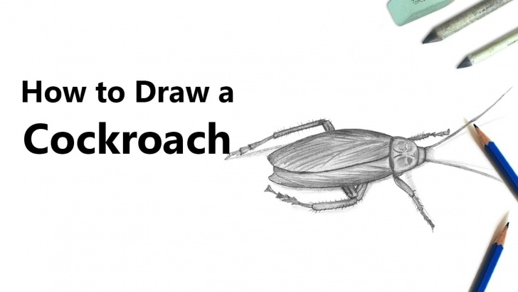Marvelous Cockroach Pencil Drawing Simple How To Draw A Cockroach With Pencils [Time Lapse] Pictures