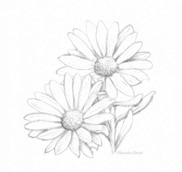 Marvelous Daisy Pencil Drawing Techniques for Beginners Found On Google From Pinterest   Printables   Daisy Flower Image