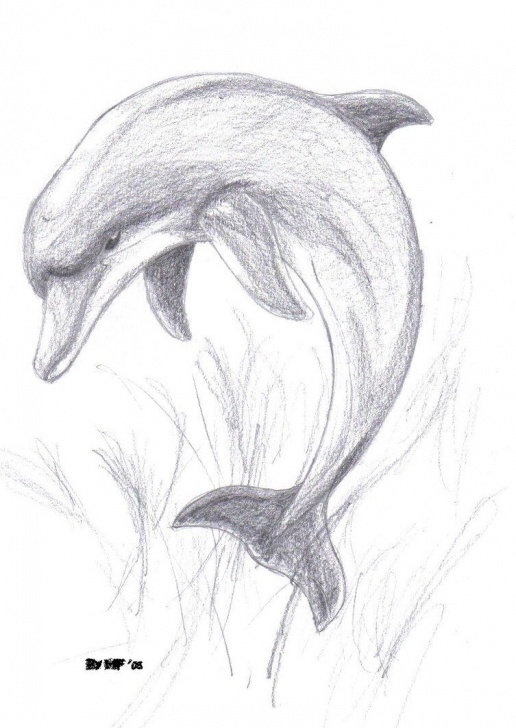 Marvelous Dolphin Pencil Drawing Easy Images For > Pencil Drawings Of Dolphins … | Pencil Drawings | Drawi… Pic
