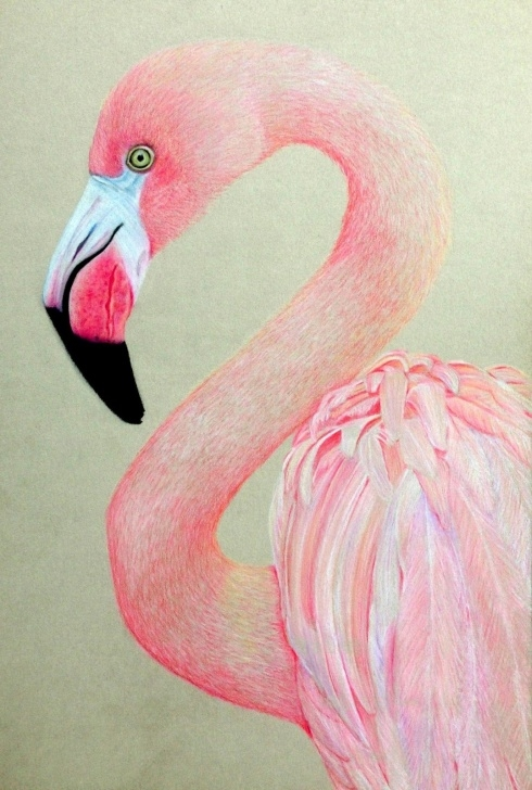 Marvelous Flamingo Pencil Drawing Tutorials Absolutely+Beautiful+Things+Pink | Coloured Pencil Sketch - Pink Pics