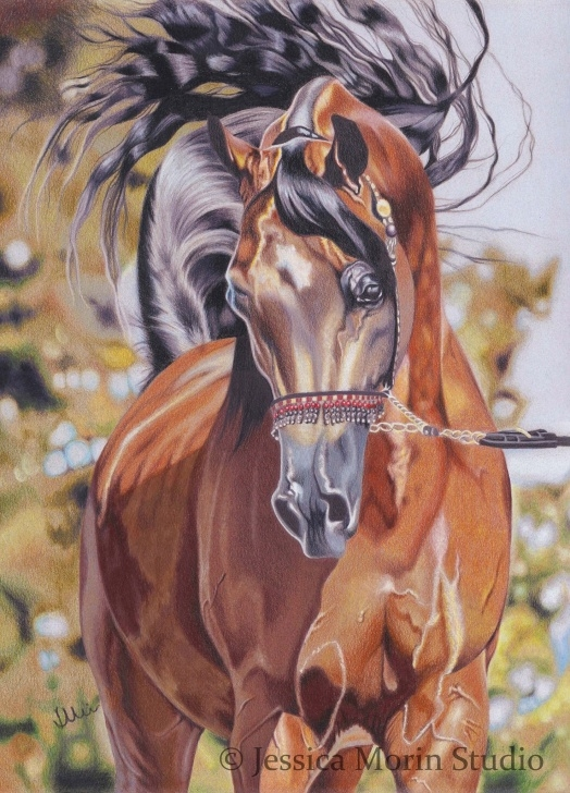 Marvelous Horse Drawing Colour Techniques for Beginners Horse Drawing ~ Colored Pencil ~ Jessica Morin | Art - Horses Pictures