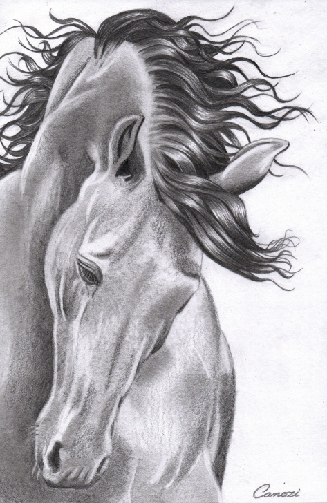 Marvelous Horse Pencil Shading Lessons Horse - Drawing Pencil By Kleyton Canozi | Projects To Try | Pencil Photos