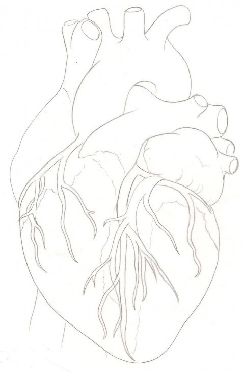 Marvelous Human Heart Pencil Sketch Easy Human Heart Tattoo By ~Metacharis On Deviantart | Always A Parents Photo