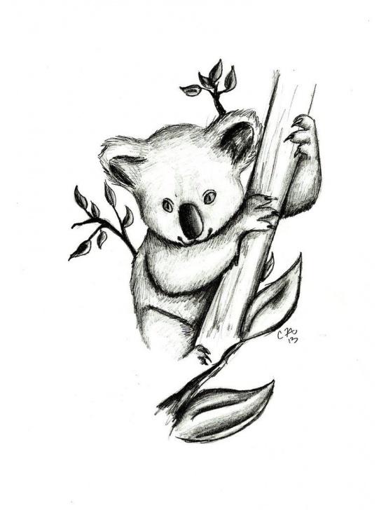 Marvelous Koala Pencil Drawing Ideas Koala Drawing Pictures - Google Search | Drawings In 2019 | Koala Picture