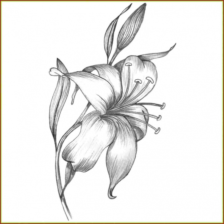 Marvelous Lily Pencil Drawing for Beginners Calla Lily Pencil Drawing At Paintingvalley | Explore Collection Photos