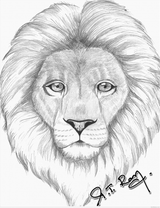 Marvelous Lion Pencil Art Tutorials Simple Lion Pencil Drawing Picture
