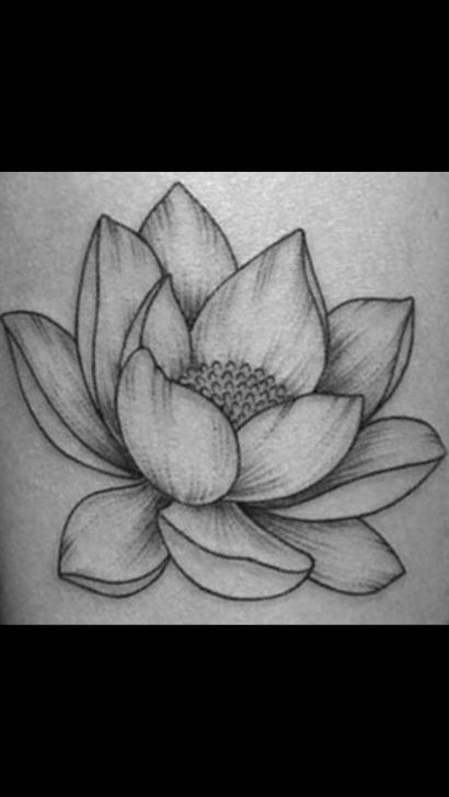 Marvelous Lotus Pencil Drawing Courses Lotus Flower Drawing | Beautiful In 2019 | Realistic Flower Drawing Pic