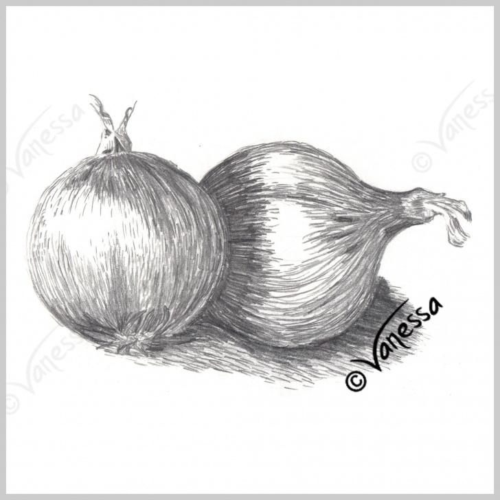 Marvelous Onion Pencil Drawing for Beginners Onions Still Life Study Pencil Drawing Art Original Artwork Realism Pics