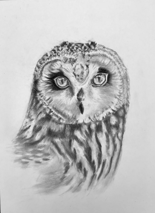 Marvelous Owl Pencil Drawing for Beginners Owl Pencil Drawing Photos