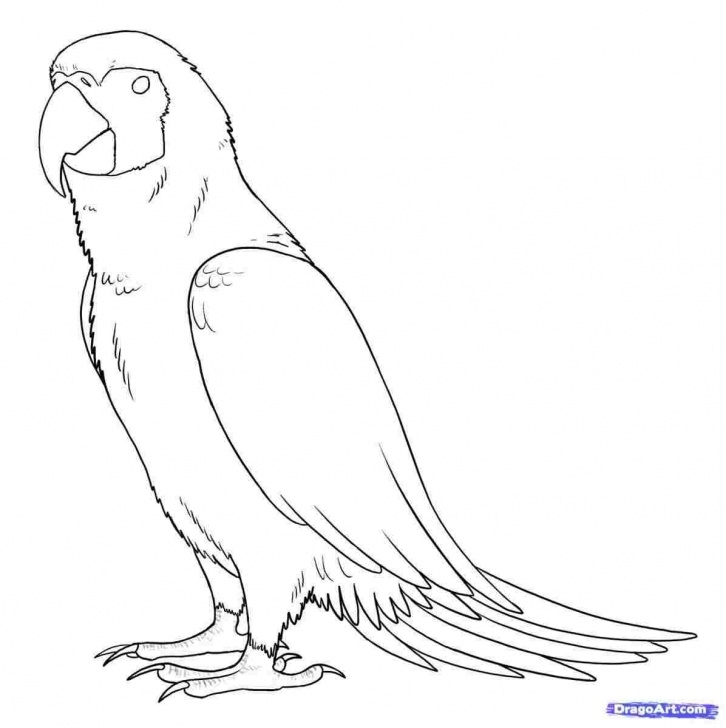 Marvelous Parrot Pencil Sketch Courses Who Is Addicted To Rhdrawingslycom Images Drawing Pics