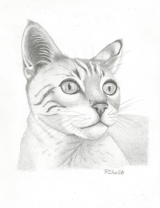Marvelous Pencil Art Animals Free Tiger Kitty Paper Art By Robin Shields - Artist Photos