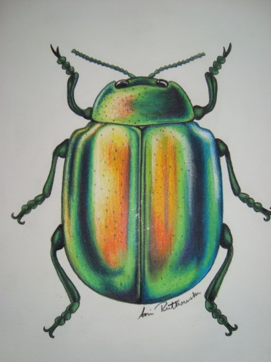 Marvelous Pencil Crayon Drawings for Beginners Pencil Crayon Green Beetle | Drawings In 2019 | Crayon Drawings Photos