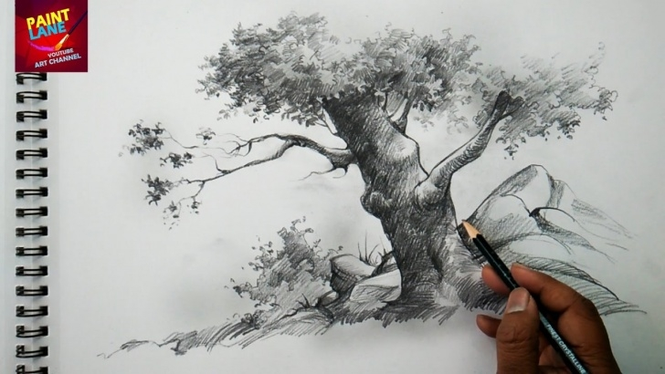 Marvelous Pencil Drawing Painting Easy Basic Sketch And Shade A Tree With Pencil | Pencil Art Picture