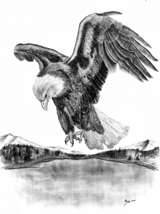 "Marvelous Pencil Drawings Of Eagles In Flight Simple Drawings Of American Bald Eagles | Charcoal Drawing – ""American Bald Image"