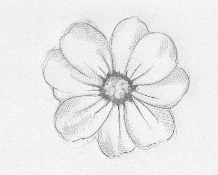 Marvelous Pencil Shading Flowers Lessons Flower Shading Drawing At Paintingvalley | Explore Collection Of Photos