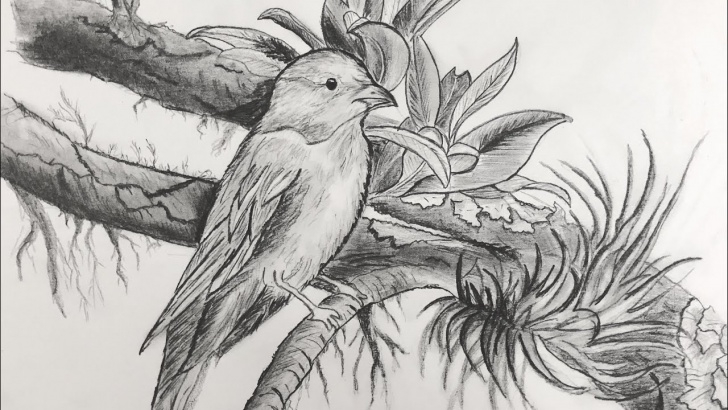 Marvelous Pencil Sketches Of Birds Tutorials How To Draw A Bird - Pencil Drawing Of A Bird - How To Draw And Shade Using  Pencils. Pictures