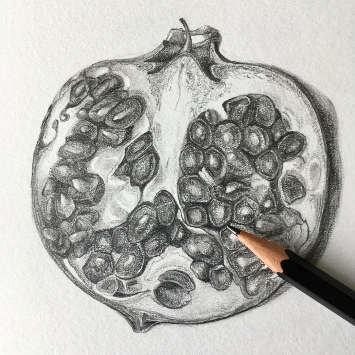 Pomegranate Pencil Drawing