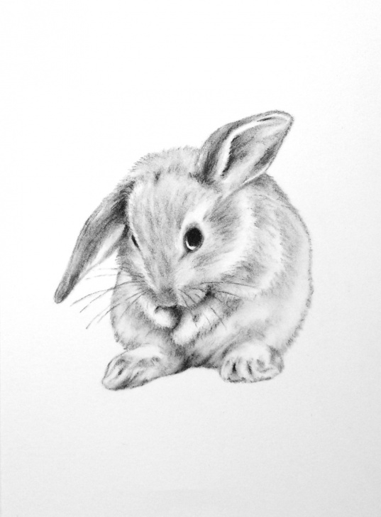 Marvelous Rabbit Pencil Drawing Techniques for Beginners Bunny Rabbit Sketch At Paintingvalley | Explore Collection Of Image