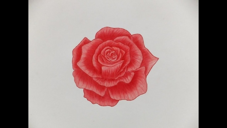 Marvelous Rose Color Pencil Drawing Lessons How To Draw A Rose With Color Pencils Images
