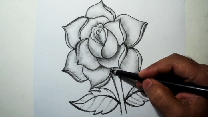 Marvelous Rose Pencil Drawing Easy How To Draw A Rose || Easy Pencil Drawing Pic